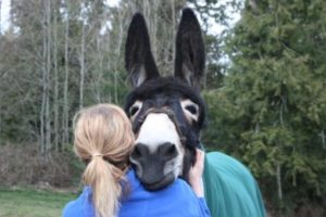 girl hugging donkey